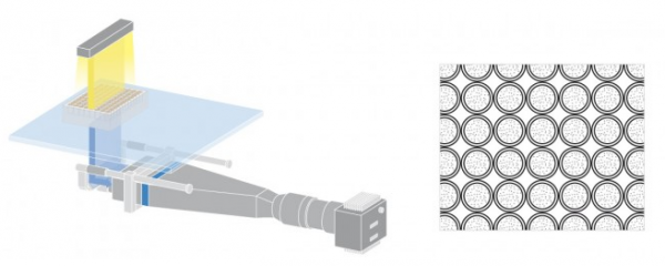 Petri_Dish_diagram