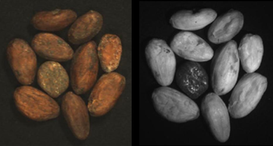 fusion cocoa beans
